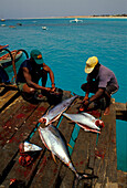 Fishing, S.Maria, Sal, Cape Verde Islands, Africa