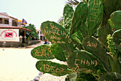 Cactus with engraved names, Santa Maria, Sal, Cape Verde, Africa