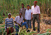 Workers on plantation of sugar cane, Paul, Santo Antao, Cape Verde Islands, Africa
