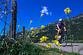 Cyclist on a lonesome country road under blue sky, Tramuntana, Majorca, Spain, Europe