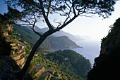 View at the coastline and sunlit cultivation terraces, Banyalbufar, Serra de Tramuntana, Majorca, Spain