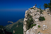 Tekking, Bridle Path of Archduke, Serra de Tramuntana Mallorca, Spanien