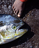 Close up of a fish with child's foot, Cape Verde Islands