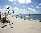 Sandy beach, Praia de Chave, Boa Vista, Cape Verde