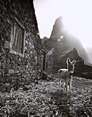 Donkey, Santo Antao Cape Verde