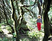 Child standing at sunlit bay forest, Raya de la Llania, El Hierro, Canary Island, Spain, Europe