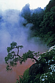 Tree at slope with fog, Japan