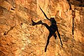 Shadow of a man abseiling, Free climbing, Arizona, USA