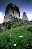 Alpine pasture with oxeye daisies, Cinque Torre, Cortina d'Ampezzo, Dolomites, South Tyrol, Italy