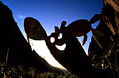 Cactus with smiling Face, Tenerife Canary Islands, Spain