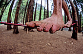 Climber's foot during funambulation, Camp 4, Yosemite Valley, California, USA