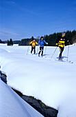 Triplet of nordic cruisers on snowy landscape, Nordic Cruising, Muehlviertel, Upper Austria