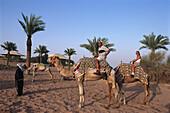 Camel Riding at sunset, al Maha Desert Resort, Dubai, VAE