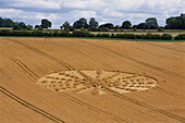 Crop Circle in a cornfield, Near Alton Barnes, Wiltshire, England, Great Britain