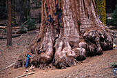 Boy standing next to a Giant Sequoia, Mariposa Grove, Yosemite National Park, California, USA
