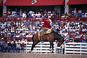 Cowboy, Rodeo, Cheyenne Frontier Days Rodeo, Wyoming USA