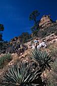 Agaves and Mule Trek, Bright Angel Trail, Grand Canyon NP Arizona, USA