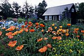 Akureyri Botanical Garden, Poppies, Farmhouse, Akureyri, Iceland