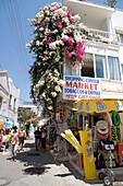 Bougainvillea, Storefront, Bodrum, Turkish Aegean, Turkey
