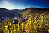 Wineberg in der Nähe von Mayschoß, Ahrtal, Eifel, Rheinland-Pfalz, Deutschland
