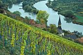 Weinanbau bei Köhler bei Volkach, Mainfranken, Bayern, Deutschland