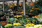Blumenmarkt, Amsterdam Niederlande