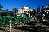 Winery, Agritourismo La Chiusa, Isola d'Elba Tuscany, Italy