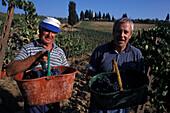 People at grape gathering, Castello di Monsanto, Barberino, Chianti, Tuscany, Italy, Europe