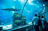 Underwater tunnel in an aquarium, L'Aquarium, Moll D'Espana, Barcelona, Catalonia, Spain