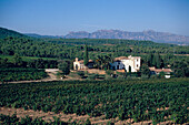 Estate with vineyard, Sta. Margarita d'Agulladolc, Torres Riserva Real, Penedes, Catalonia, Spain