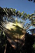 Jardin Botanique de Deshaies, Cactus in a Botanic Garden, Jardin Botanique de Deshaies, Basse-Terre, Guadeloupe, Caribbean Sea, America