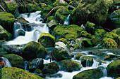 Karst Creek, Strathcona NP, Vancouver Island British Columbia , Kanada