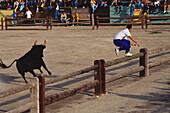Man jumping over a fence, Celebration of the bulls of Camargue, Aigues-Mortes, Gard, Provence, France, Europe