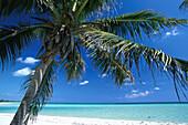 Palm beach with palm tree, Carribean coast south of Tulum, Quintana Roo, Yucatán peninsula, Mexico