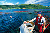 Fischerman feeding the salmon, Fish Farm, Follalaks, Morsvikfjord, Nordland, Norway
