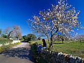 Person enjoying a rest beneath a blossoming almond tree, Palma de Mallorca, Mallorca, Spain
