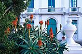 Aloe vera before City hall, Haria, Lanzarote, Canary Islands, Spain