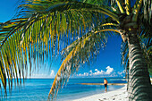 Beach with palm tree at Rum Point, Grand Cayman, Cayman Islands, Caribbean