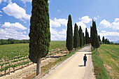 Woman walking on cypress avenue, Val d´Orcia, Tuscany, Italy
