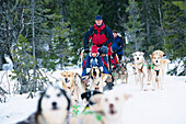 Dog sledding with the family, Areboernen Are, Sweden