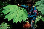 Giant leaf, Cloud forest reservation, Santa Elena, Costa Rica, Caribbean, Central America, America
