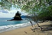 Idyllic beach in the sunlight, Playa Espadilla, Manuel Antonio, Costa Rica, Central America, America