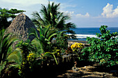 Pavilion and palm tree on the beach, Playa Hermosa, Jaco, Costa Rica, Central America, America