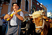 Musician and cart pulled by of oxen, Romeria Festival, Folklore, Galdar, Canary Islands, Spain