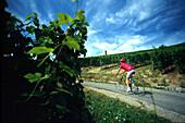 Radfahrer, Weinreben, Rodern Elsass, Frankreich
