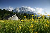 Barn on meadow, Wettersteingebirge with Zugspitze in background, Garmisch-Partenkirchen, Bavaria, Germany