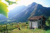 Fahrradfahrer macht Pause in den Weinbergen, Trentino, Italien