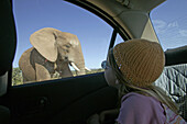 Girl watching african elephants through car window, Addo Elephant Park, Eastern Cape, South Africa