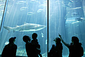 Sharks, visitors, Two Oceans Aquarium, Cape Town, West Cape, South Africa