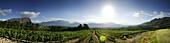 Vineyard, Franschhoek, Wine Region, Western Cape, South Africa